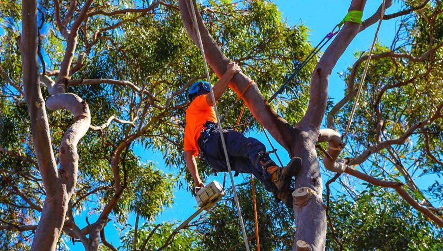 tree-pruning-in-Sydney-NSW