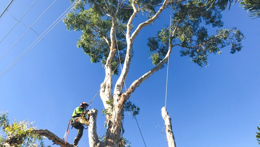 power lines tree removal