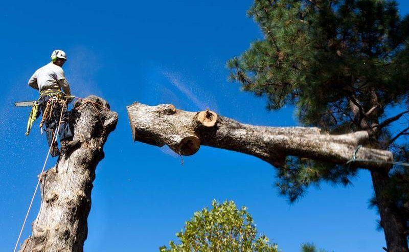 tree-removal-sydney