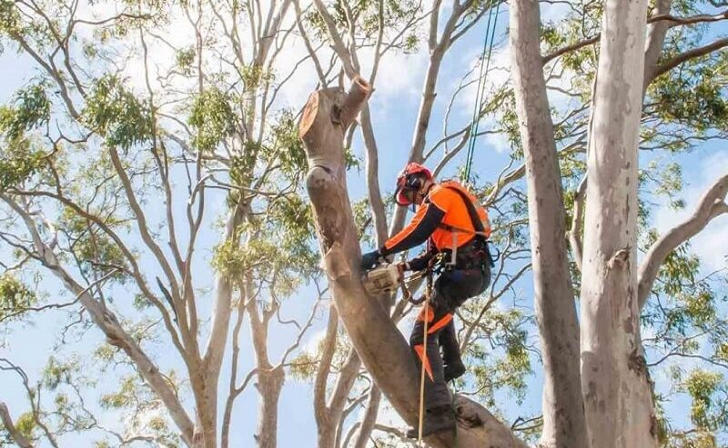 tree-services-northern-beaches